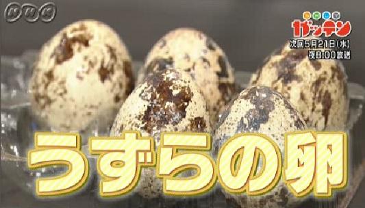 ためしてガッテン 5月21日 うずらの卵.jpg